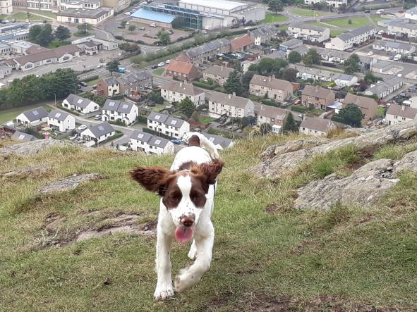 Smile No.302 - Cocoa beaming bright while having a wild time on her first trip up North Berwick Law.